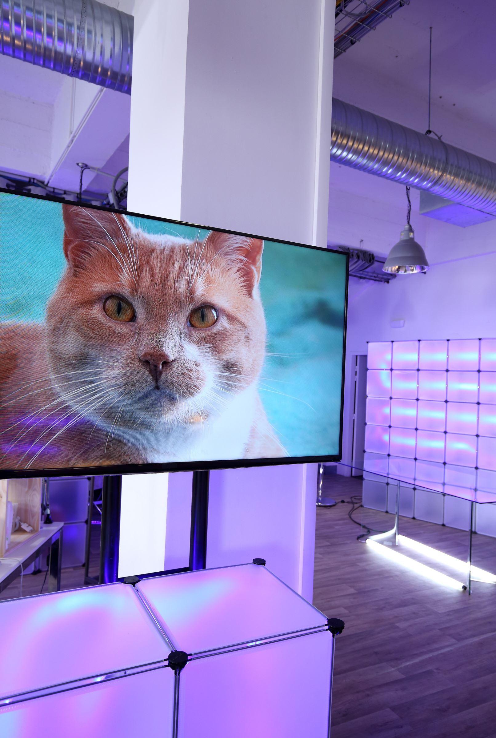 La Vie Secrete Des Chats Saison 3 : secrete, chats, saison, Secrète, Chats, Secrets, Saison, Télé