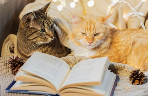 two cats reading a book © Can Stock Photo / dolgachov