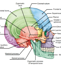 terminology related to the cranial bones  [ 1101 x 877 Pixel ]