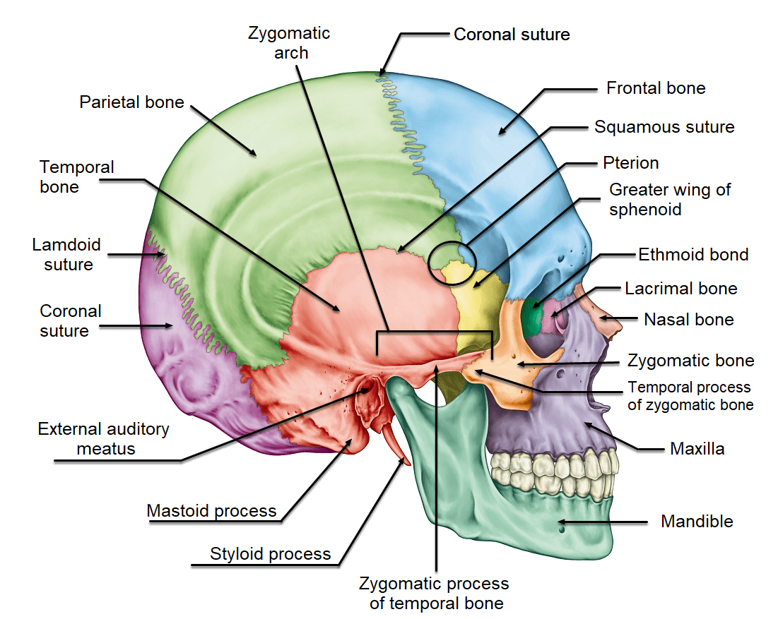 hight resolution of terminology related to the cranial bones