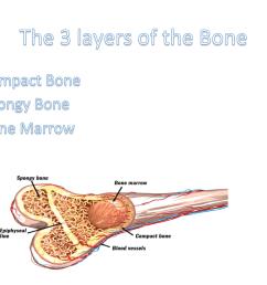 spongy bone diagram [ 1280 x 800 Pixel ]