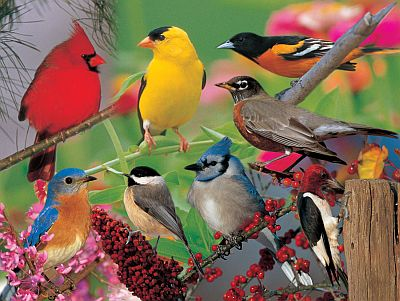 Image result for different types of birds together