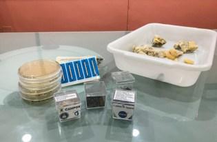 Sementes de alface, caruru e amostras de carne salgada com arqueobactérias halofílicas foram enviadas as espaço na última expedição [Fotos: Prefeitura de Campos]