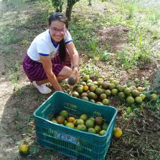 Voluntária ajudando no trabalho de seleção das frutas. (Foto: Reprodução)