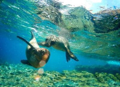 10 Best Tahiti & Bora Bora Cruises for 2019-2020