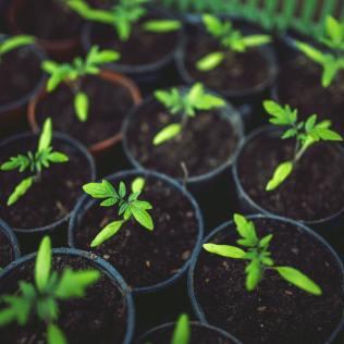 Agricultura itinerante e a sua influência no mundo agro