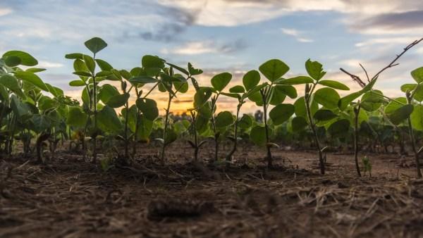 In Natura: Entenda as vantagens de consumir e produzir estes alimentos