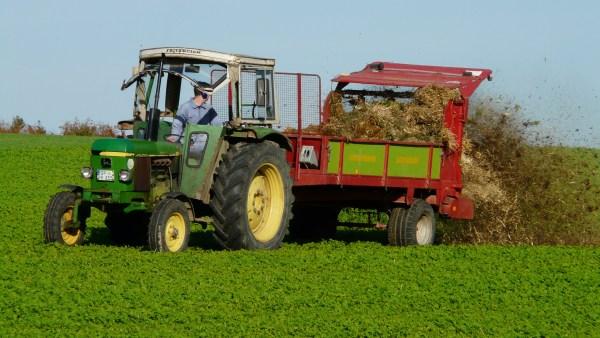 Estrume animal é utilizado como fertilizante do solo agrícola