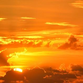 Aclimatação e os impactos que pode ocasionar nos seres vivos