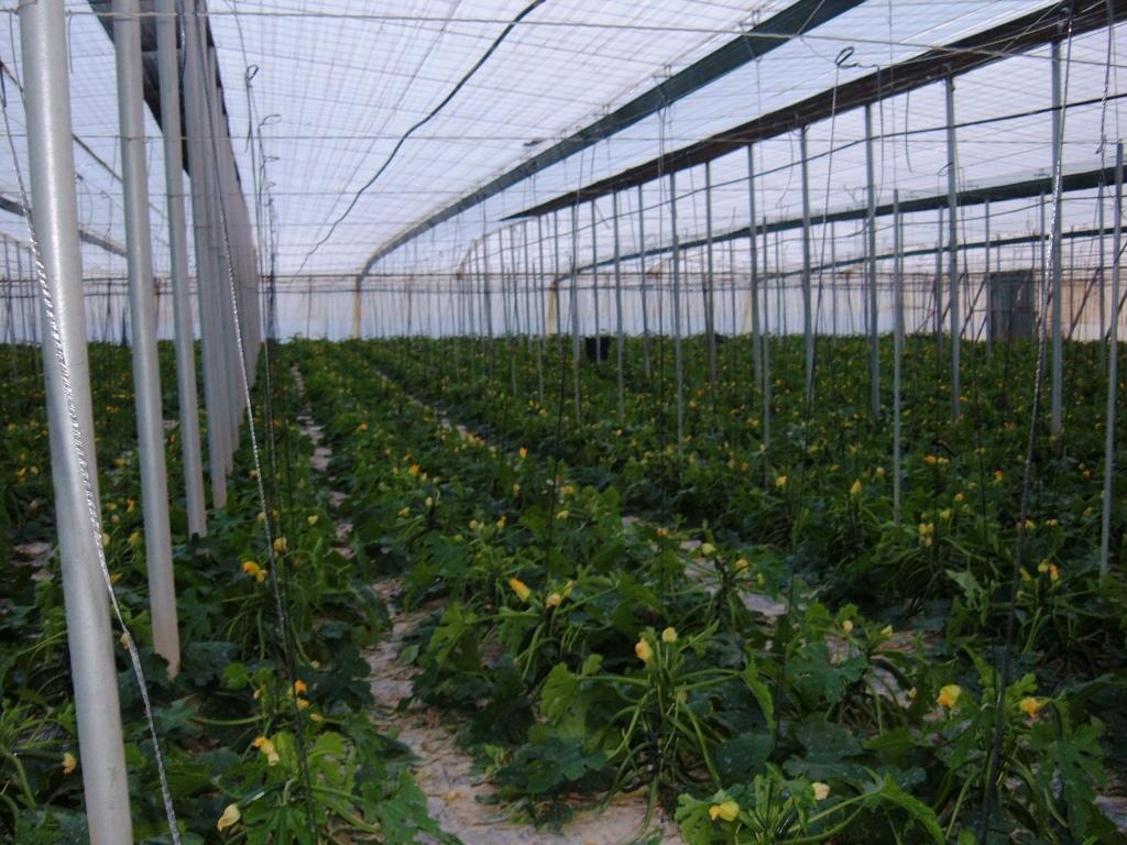 Agricultura intensiva: incremento de novas tecnologias