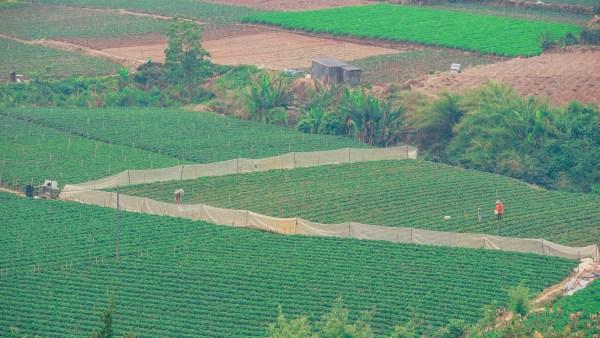 Os agropolos como um incentivo às cadeias produtivas do agronegócio