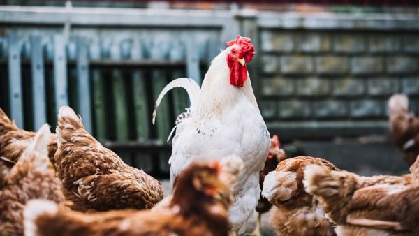 Confinamento: saiba como funciona esse sistema de criação de animais