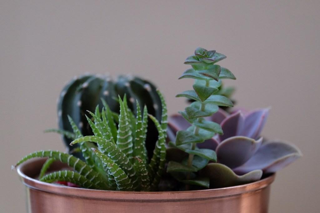 Cultivar: cultivo de flores e plantas