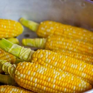 Debulhador de milho: quais suas funções nas atividades agrícolas
