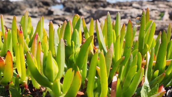 Estaquia é um método reprodutivo da vegetação que impacta a agricultura