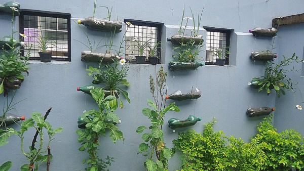 Horta suspensa: entenda tudo sobre este tipo de plantação
