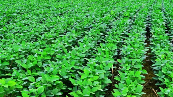 Importação no Brasil e os seus reflexos no agronegócio
