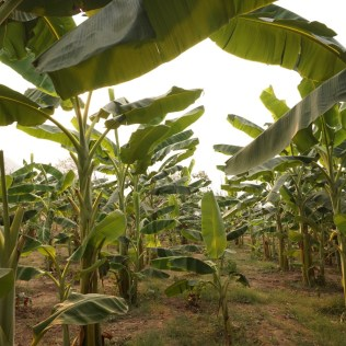 Produção agrícola tem crescimento no mercado externo de commodities