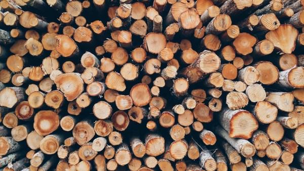 Silvicultura e a sua importância para a conservação ambiental