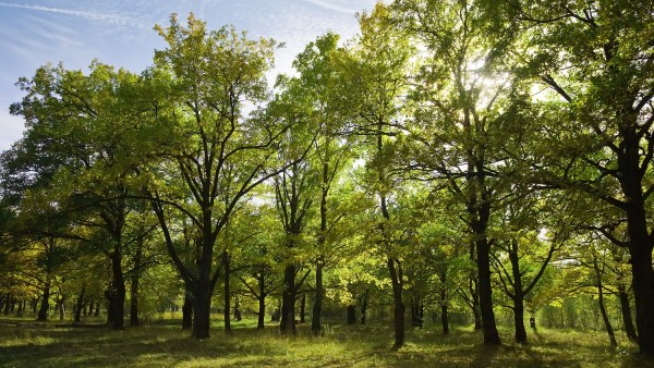 Vertex: saiba o que é e como funciona esse medidor florestal