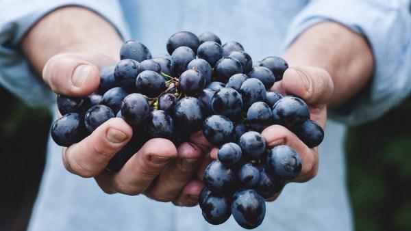 Viticultura: Brasil exporta cerca 1,5 milhões de toneladas de uva por ano