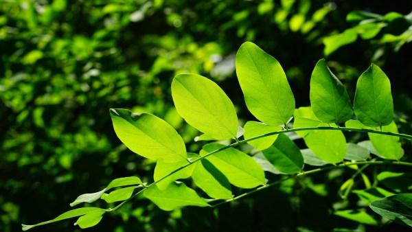Estroma pode ser encontrado em plantas e no corpo humano