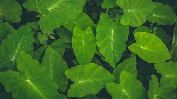Floema é tecido que abastece e repõe nutrientes das plantas