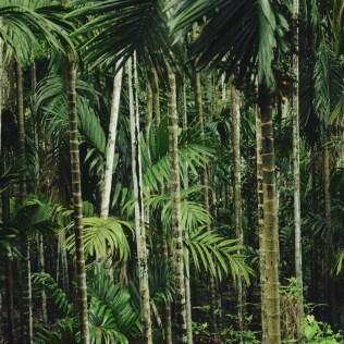 Bambu tem grande importância nas produções agrícolas