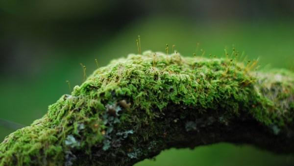 Bioindicadores podem indicar se um habitat é saudável ou poluído