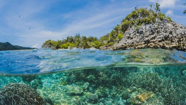 Fitoplâncton: saiba a importância desses vegetais para o meio ambiente