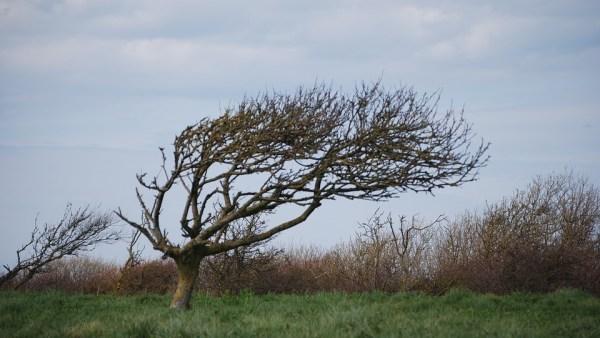 O vento é um fenômeno imprescindível para a produção de energia eólica