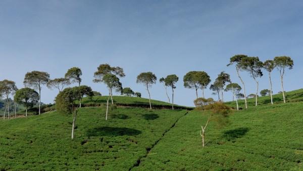 Encosta é região de declive situada em morros e montanhas