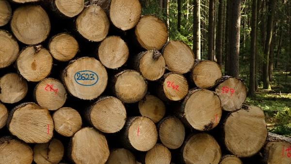 Extração é o ato de retirar e industrializar madeira e minérios