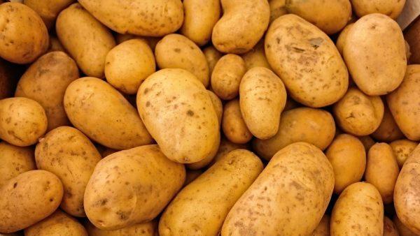Batata baroa é uma fonte rica de vitaminas e minerais