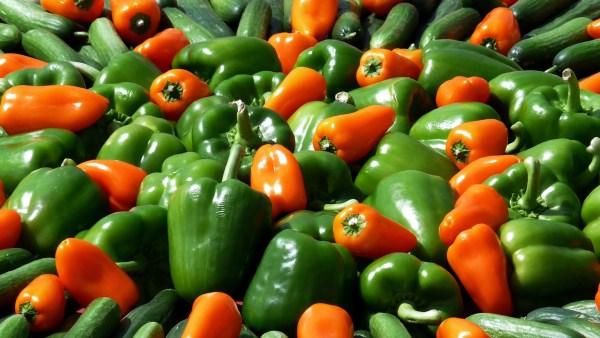 O pimentão e a sua importância de produção no campo rural