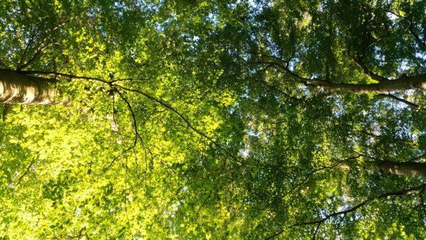 Vegetação é fundamental para o equilíbrio ecológico
