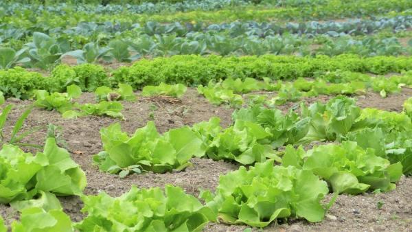 Agrotóxicos são importantes para a produtividade agrícola