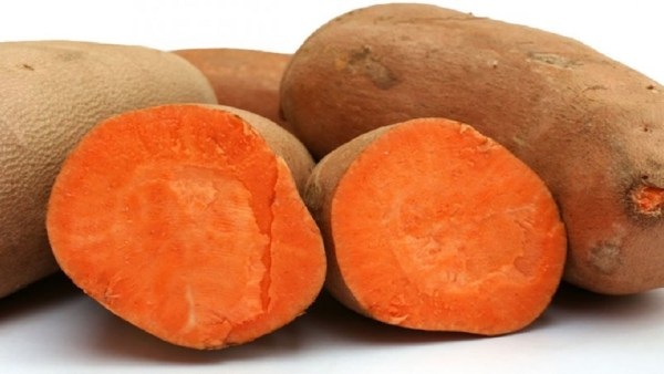 Batata yacon é tubérculo saudável e plantio requer bastante água