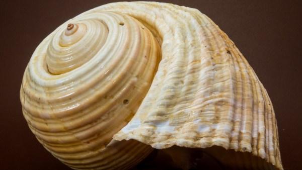 Escargot é um molusco consumido pelo homem desde a antiguidade