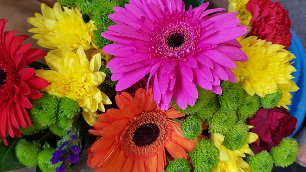 Gerbera é uma flor que alia beleza a alto valor comercial