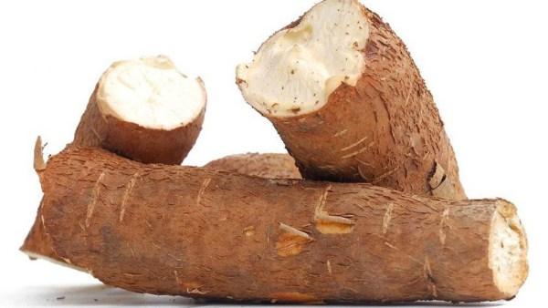 Mandioca é um tubérculo altamente energético e amado no Brasil todo