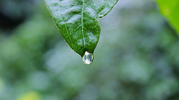 Ciclo da água é fundamental para a agropecuária brasileira
