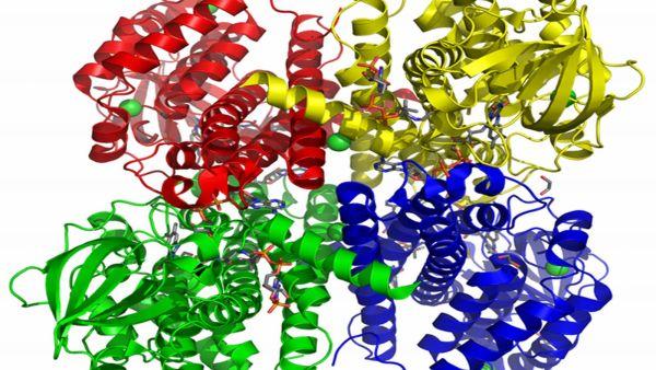Enzimas são proteínas que contribuem para a reação metabólica
