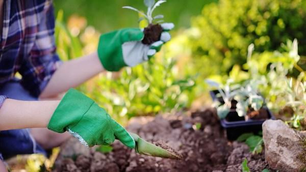 Jardinagem pode ser considerada uma arte ou um sistema agrícola