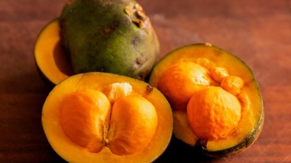 Pequi é fruto nutritivo e bastante utilizado na culinária do sertão