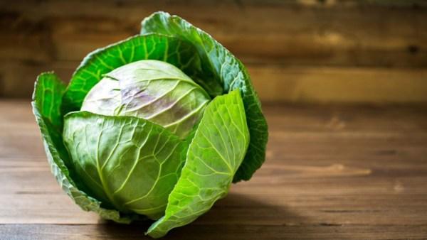 Repolho é um dos vegetais mais consumidos pelos brasileiros