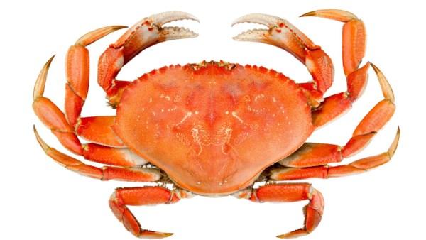 Caranguejo é um crustáceo mundialmente utilizado na culinária