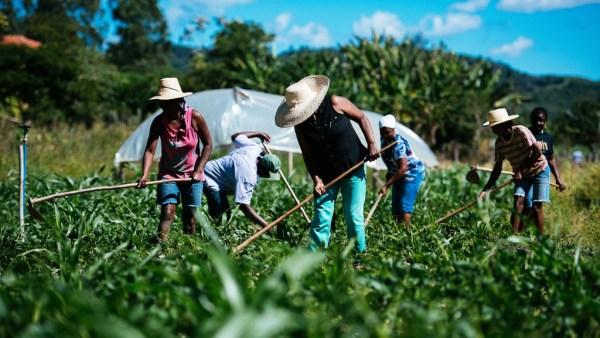 Agropecuária é importante para movimentação da economia do país