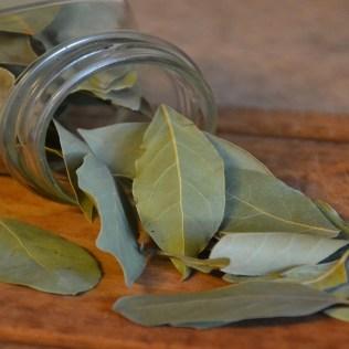 Folha de louro é utilizada na culinária e possui propriedades medicinais