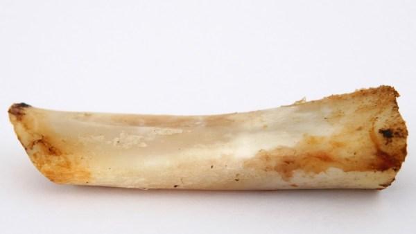 Medula espinhal bovina é rica em colágeno, proteínas e carboidratos